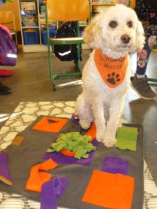 Der Schulhund Mocca sitzt auf einer Hundedecke und wartet gespannt.