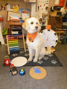 Der Schulhund Mocca sitzt auf einer Hundedecke umgeben von verschiedenen Spielsachen zum Lernen in der Vorklasse.